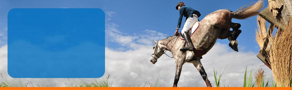SH-sporthorses_header-00.jpg